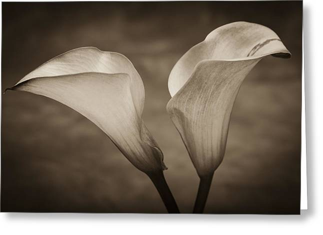 White Photographs Greeting Cards - Calla Lilies in Sepia Greeting Card by Sebastian Musial