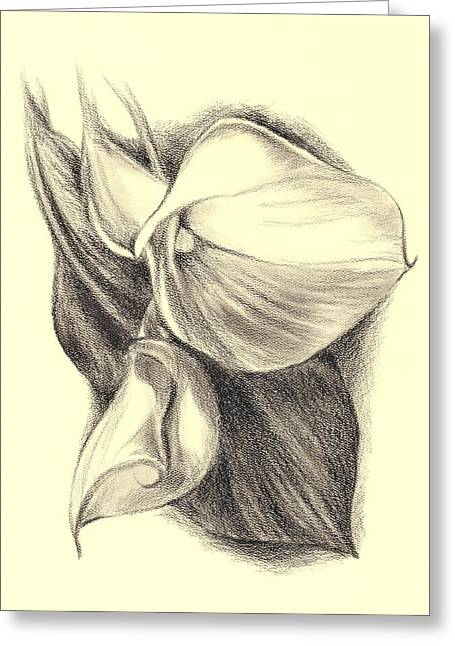 Calla Lily Drawings Greeting Cards - Calla Lilies Greeting Card by MM Anderson