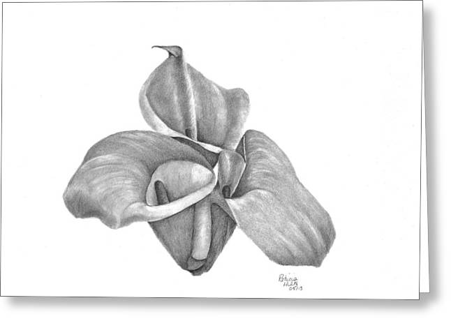 Calla Lily Drawings Greeting Cards - Calla Lilies Greeting Card by Patricia Hiltz