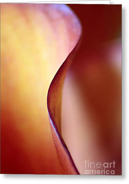 Curvy Beauties Greeting Cards - Calla Lily Abstract Greeting Card by Darren Fisher