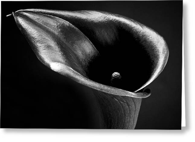 Flora Framed Prints Greeting Cards - Calla Lily Flower Black and White Photograph Greeting Card by Artecco Fine Art Photography