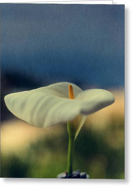Close Focus Floral Greeting Cards - Calla Lily Greeting Card by Marco Oliveira
