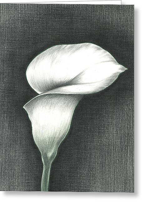 Calla Lily Drawings Greeting Cards - Calla Lily Greeting Card by Troy Levesque
