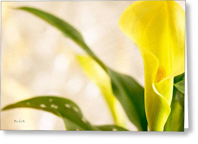 Soft Romantic Greeting Cards - Calla Lily Two Greeting Card by Bob Orsillo