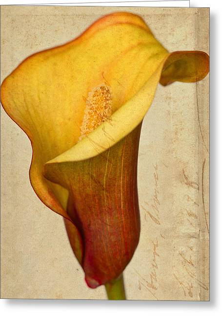 Day Lilly Greeting Cards - Calla Lily Vintage  Greeting Card by Heidi Smith