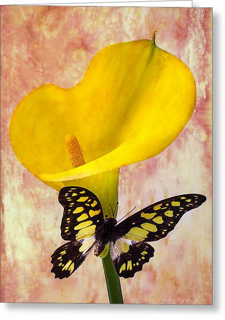 Calla Lily With Butterfly  Greeting Card by Garry Gay
