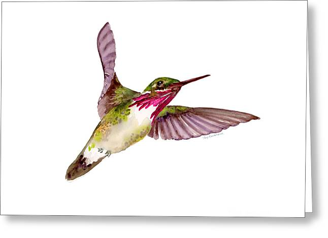 Calliope Hummingbird Greeting Card by Amy Kirkpatrick