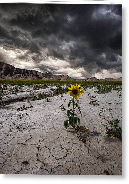 Severe Greeting Cards - Calm Before The Storm Greeting Card by Aaron J Groen