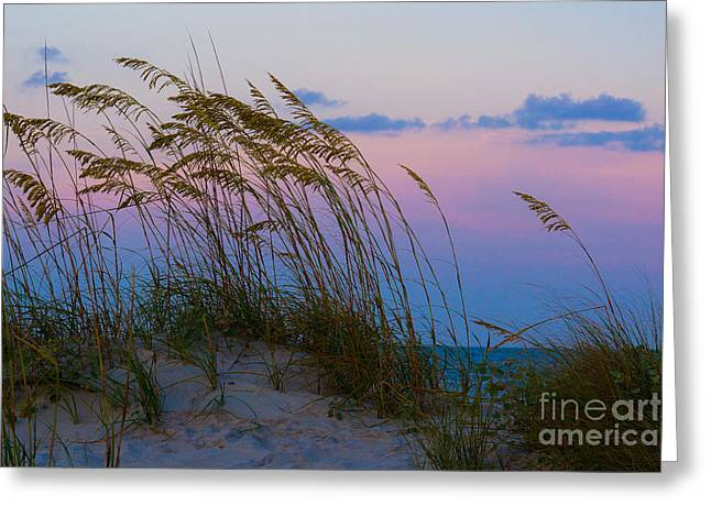 Sea Oats Greeting Cards - Calm Evening Greeting Card by Matthew Trudeau