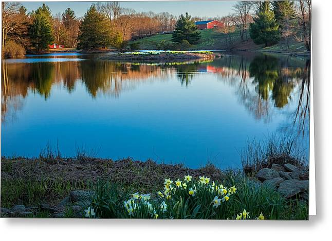 Daffodil Greeting Cards - Calm Evening Square Greeting Card by Bill  Wakeley