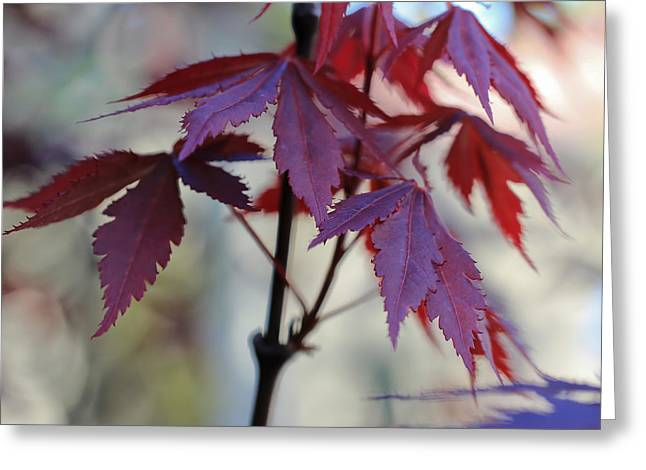 Red Leaves Greeting Cards - Calm Greeting Card by Heidi Smith