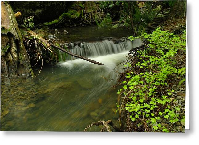 CALM RAPIDS Greeting Card by Jeff  Swan