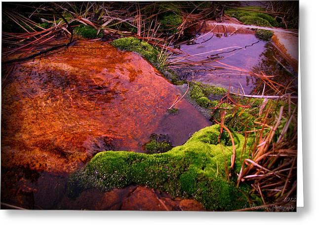 Prescott Greeting Cards - Calm Waters of Miller Creek Greeting Card by Aaron Burrows