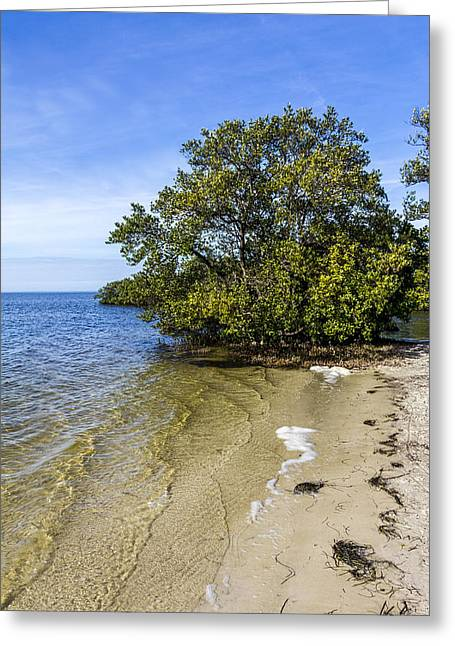 Calm Waters On The Gulf Greeting Card by Marvin Spates