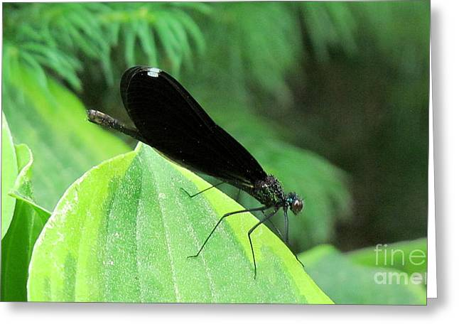 Demoiselles Greeting Cards - Calopteryx Greeting Card by France Laliberte