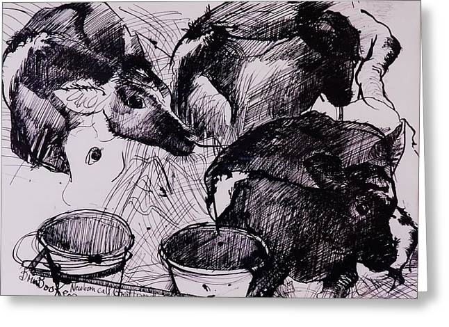 Calf Photographs Greeting Cards - Calves, Damp, Newborn, 1978 Pen & Ink On Paper Greeting Card by Brenda Brin Booker