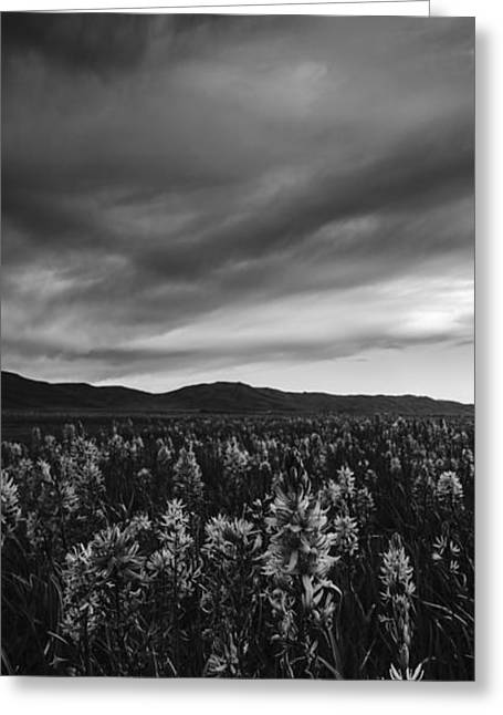 Overcast Day Greeting Cards - Camas Lilies in monochrome Greeting Card by Vishwanath Bhat