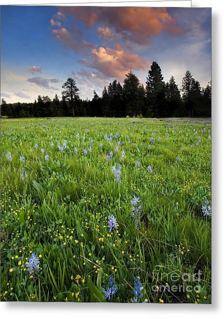 Prairies Greeting Cards - Camas Sunset Greeting Card by Mike  Dawson