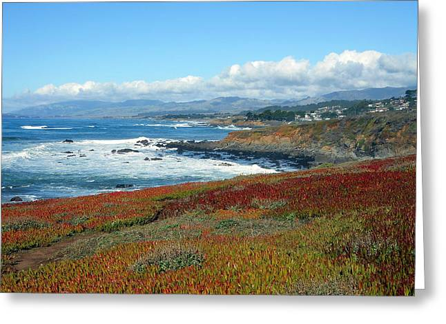 Cambria Greeting Cards - Cambria Greeting Card by Rachel O