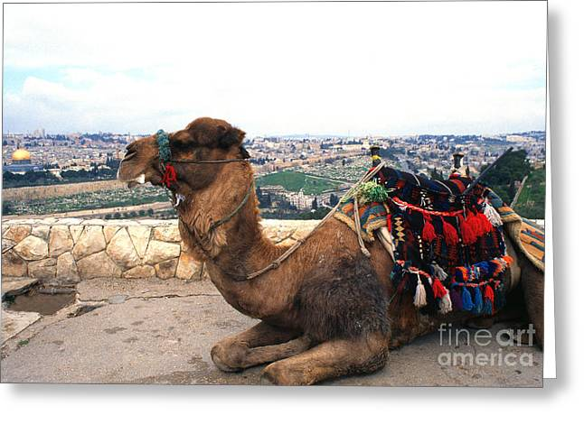 Mount Olives Greeting Cards - Camel and Jerusalem from Mount Olive Greeting Card by Thomas R Fletcher