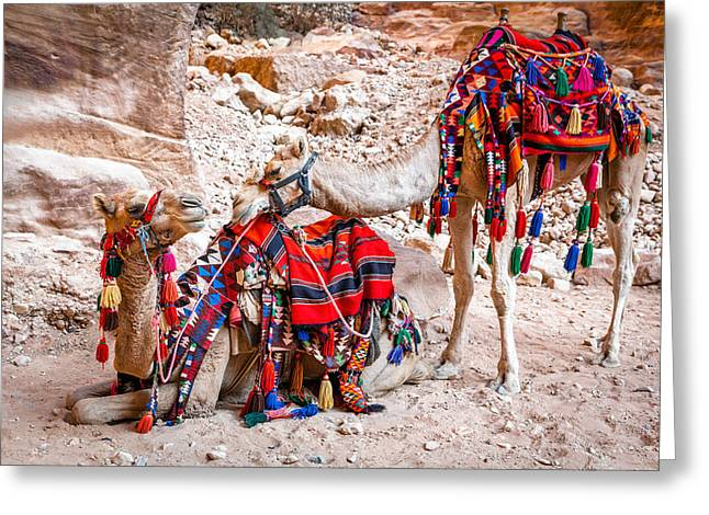 Petra Greeting Cards - Camel tenderness Greeting Card by Alexey Stiop