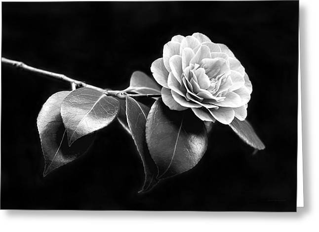 Recently Sold -  - Blooms Greeting Cards - Camellia Flower in Black and White Greeting Card by Jennie Marie Schell