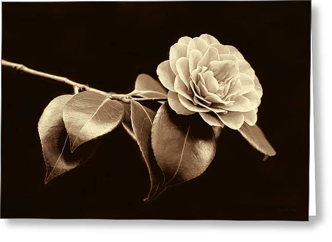 Camellia Photographs Greeting Cards - Camellia Flower in Sepia Greeting Card by Jennie Marie Schell