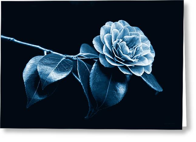 Camellia Photographs Greeting Cards - Camellia Flower Midnight Blue Greeting Card by Jennie Marie Schell