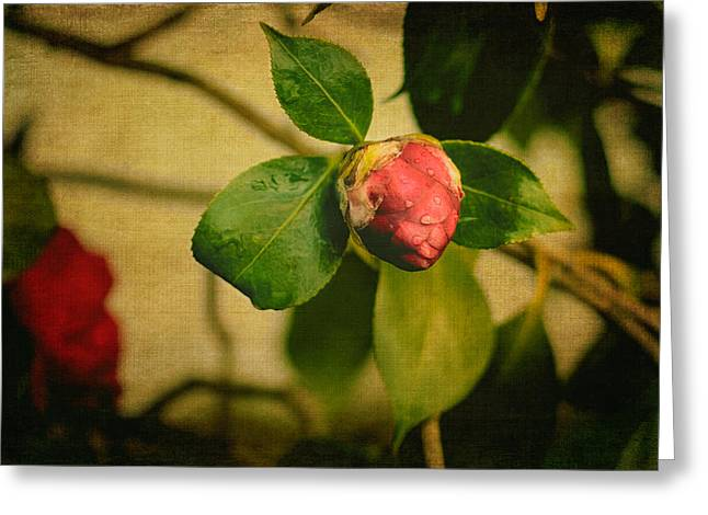 Camellia Photographs Greeting Cards - Camellia Greeting Card by Marco Oliveira