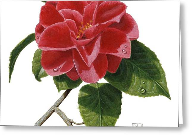 Camellia Greeting Card by Richard Harpum
