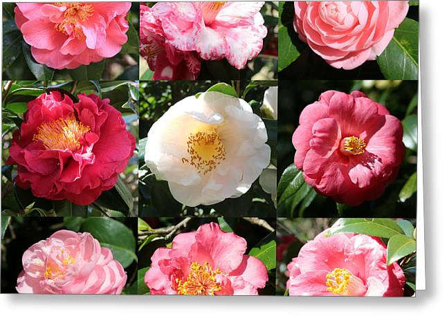 Camellia Photographs Greeting Cards - Camellia Time Collage Greeting Card by Carol Groenen