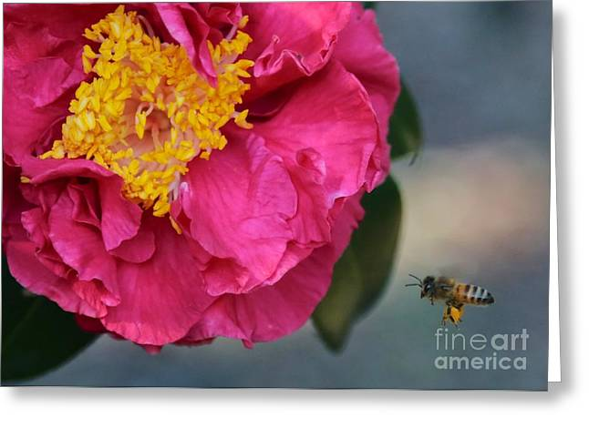 Camellia with Bee Greeting Card by Carol Groenen