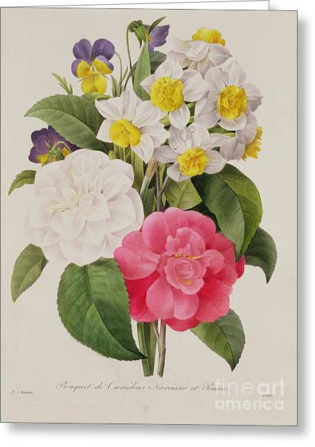 Pinks And Purple Petals Greeting Cards - Camellias Narcissus and Pansies Greeting Card by Pierre Joseph Redoute
