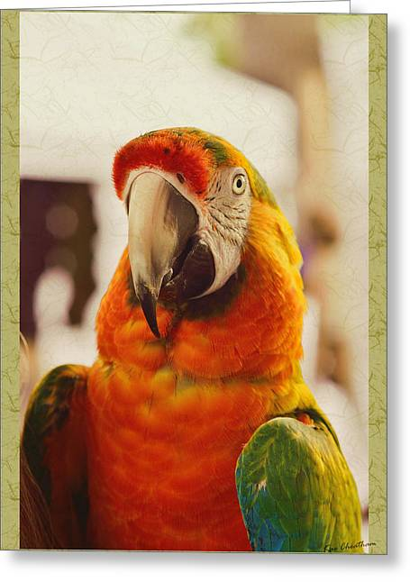 Camelot Greeting Cards - Camelot Macaw Greeting Card by Kae Cheatham