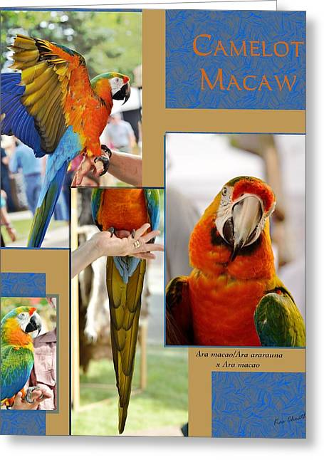 Camelot Mixed Media Greeting Cards - Camelot Macaw Poster Greeting Card by Kae Cheatham