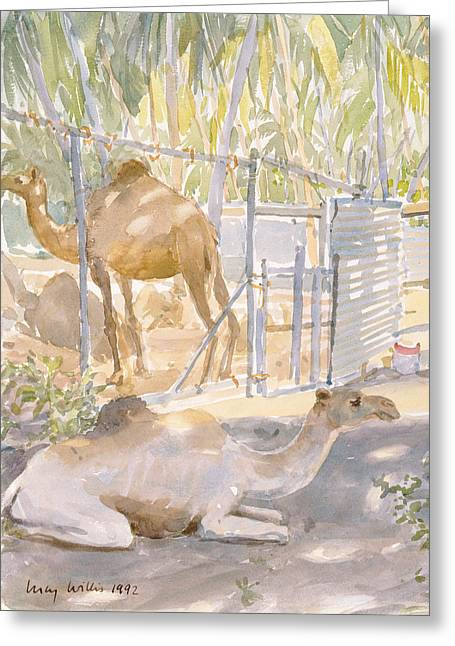 Sunny Photographs Greeting Cards - Camels At Rest, Salala Oman 1992 Wc Greeting Card by Lucy Willis