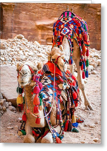 Camels Bff Greeting Card by Alexey Stiop