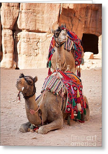 Cave Greeting Cards - Camels in Petra Greeting Card by Jane Rix