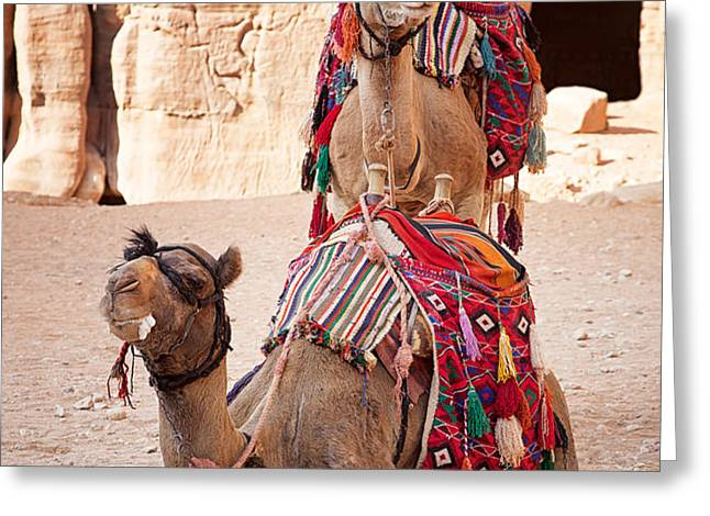 Camels in Petra Greeting Card by Jane Rix