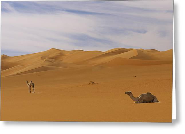 Camels Greeting Card by Ivan Slosar