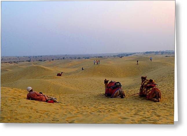 Street Pyrography Greeting Cards - Camels Kneeling Sand Dunes Thar Desert Rajasthan India Greeting Card by Sue Jacobi Photography