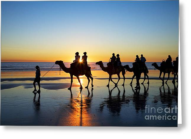 Camels Photographs Greeting Cards - Camels on the Beach Broome Western Australia Greeting Card by Colin and Linda McKie