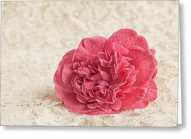 Photogaphy Greeting Cards - Camillia Greeting Card by Marion Galt