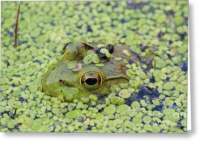 Wishful Thinking Greeting Cards - Camo Frog Greeting Card by Joseph Marquis