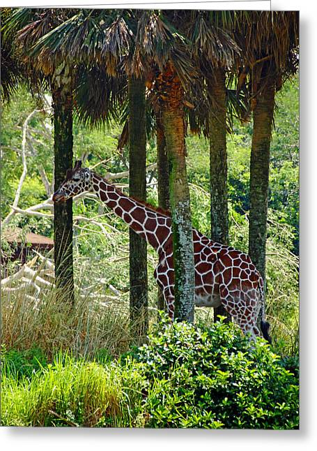 Buena Vista Grasslands Greeting Cards - Camouflage Coat Greeting Card by Debbie Oppermann
