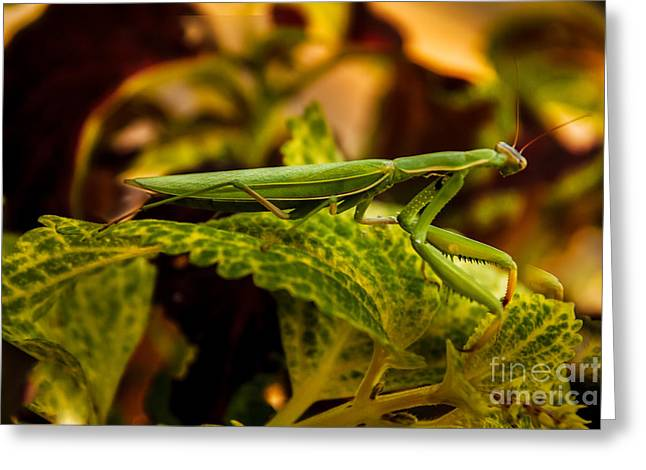 Exterminator Greeting Cards - Camouflage Special Greeting Card by Robert Bales