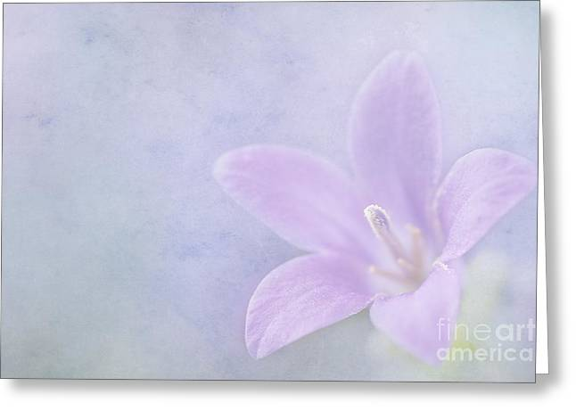 Close Focus Floral Greeting Cards - Campanula portenschlagiana Greeting Card by John Edwards