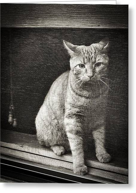 Blank Card Greeting Cards - Can Kitty Come Out Greeting Card by Patrick M Lynch