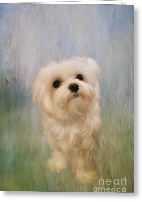 Puppies Digital Art Greeting Cards - Can We Play Now Greeting Card by Lois Bryan