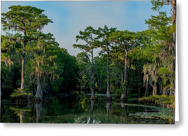 Caddo Lake Greeting Cards - Can you find the channel Greeting Card by Geoff Mckay